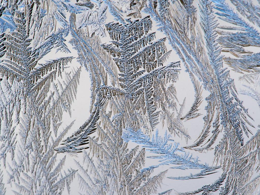 Snowy Mountain Trees